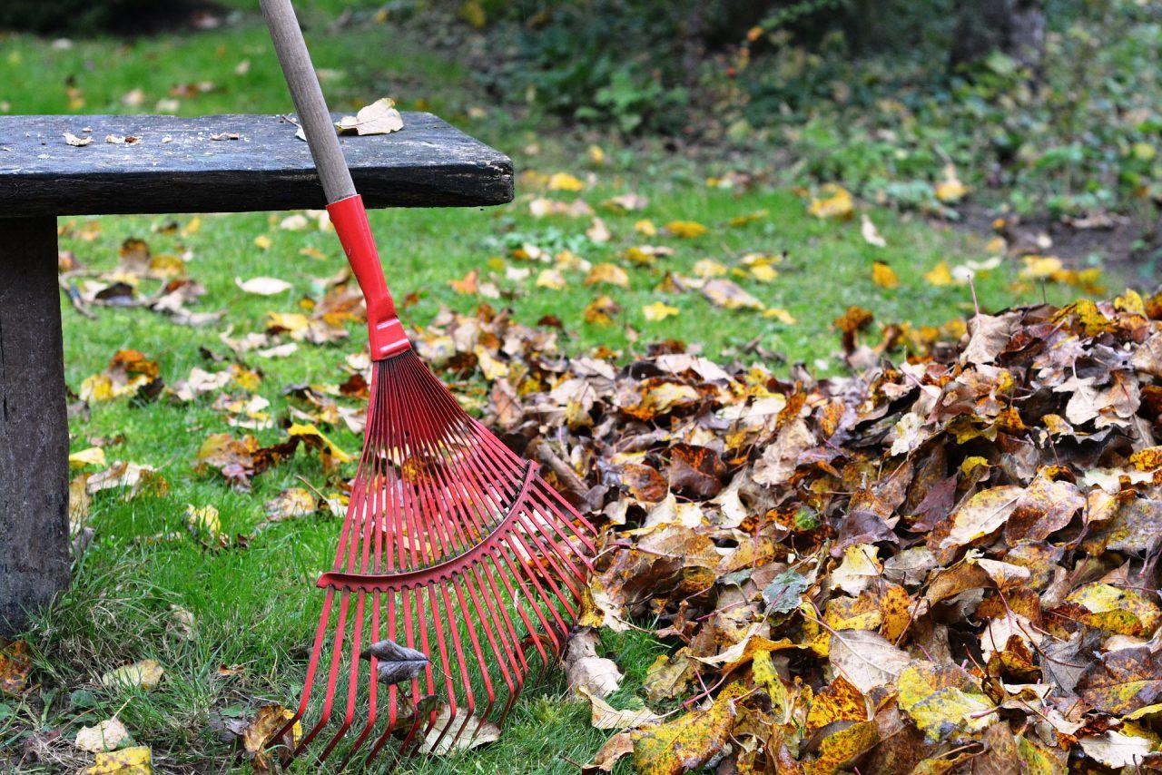 Rechen im Garten, nasse Blätter auf einem Haufen
