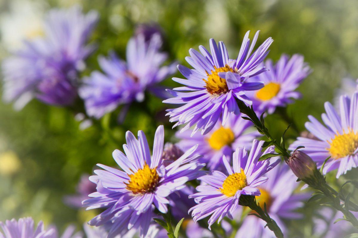 Diese Pflanzen verschönern den Garten im Herbst und Winter