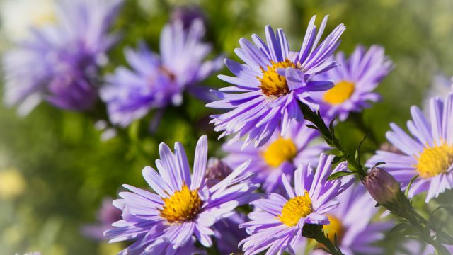 https://www.heimwerk24.de/wp-content/uploads/2018/10/asters-3733508_1920-640x360.jpg