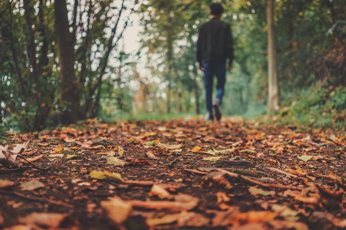 Laub auf dem Boden, Herbst, im Wald