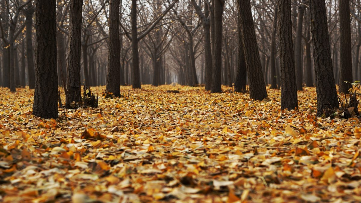 Ansammlung von Laub im Wald, Herbstmonate, kalt und nass