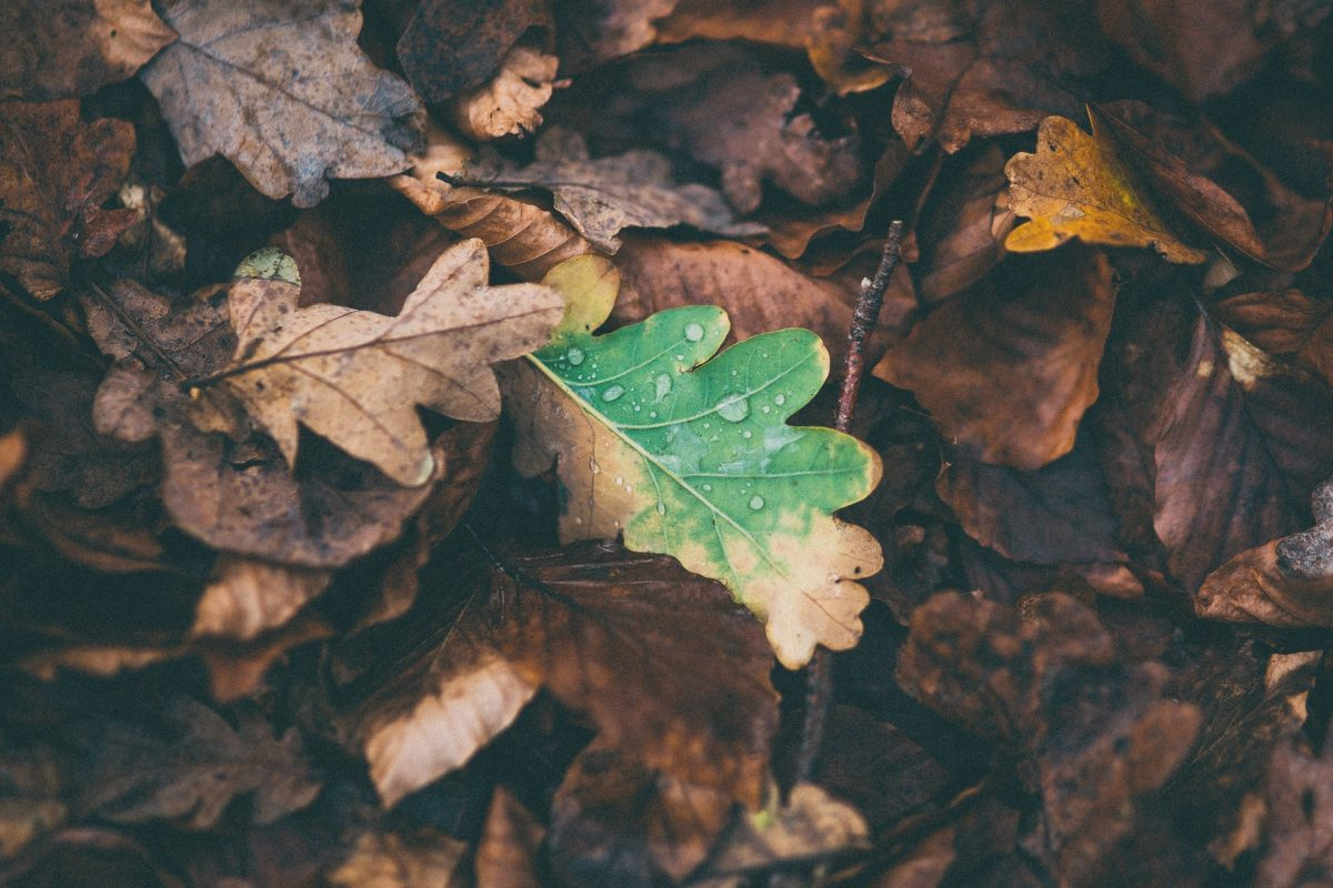 Heruntergefallene Blätter