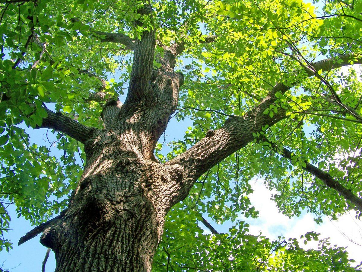 Baum und Baumkrone zurückschneiden