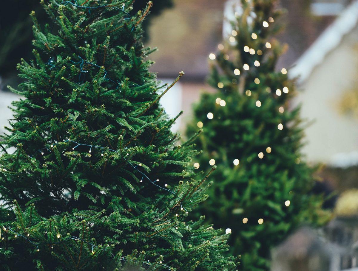 Der Weihnachtsbaum.Wie Bleibt Der Weihnachtsbaum Lange Frisch Heimwerk24 De Das