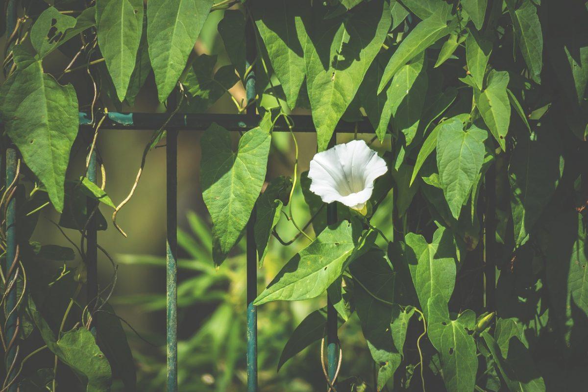 Sichtschutz im Garten, Zaun und Sträucher