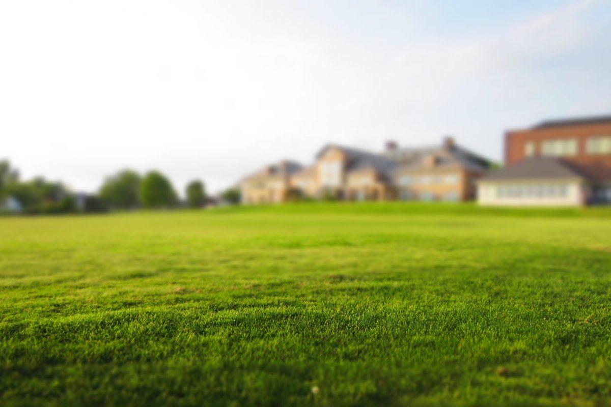 Rasen vertikutieren – Wie vertikutiert man richtig?
