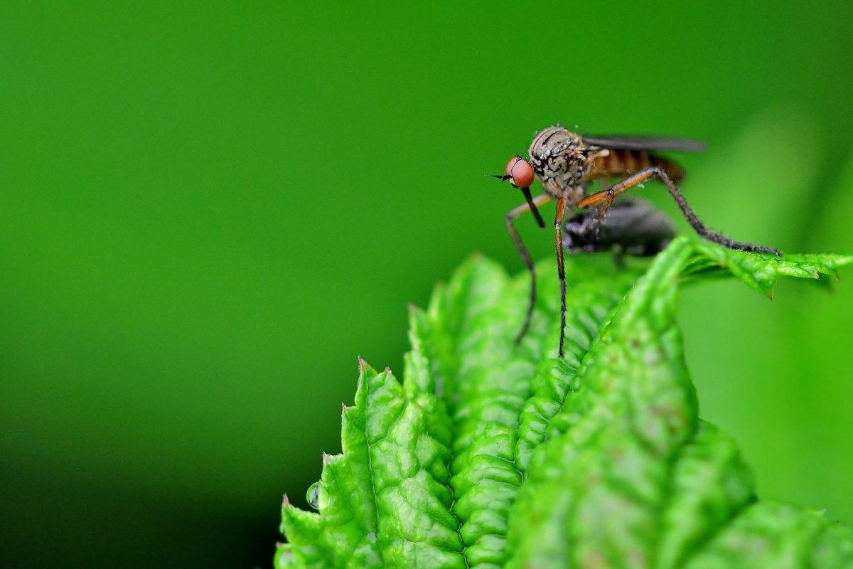 Mücken vertreiben mit einfachen Hausmitteln – Tipps & Tricks