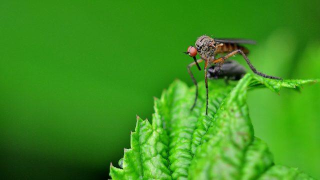 https://www.heimwerk24.de/wp-content/uploads/2019/07/insect-4276175_1920-640x360.jpg