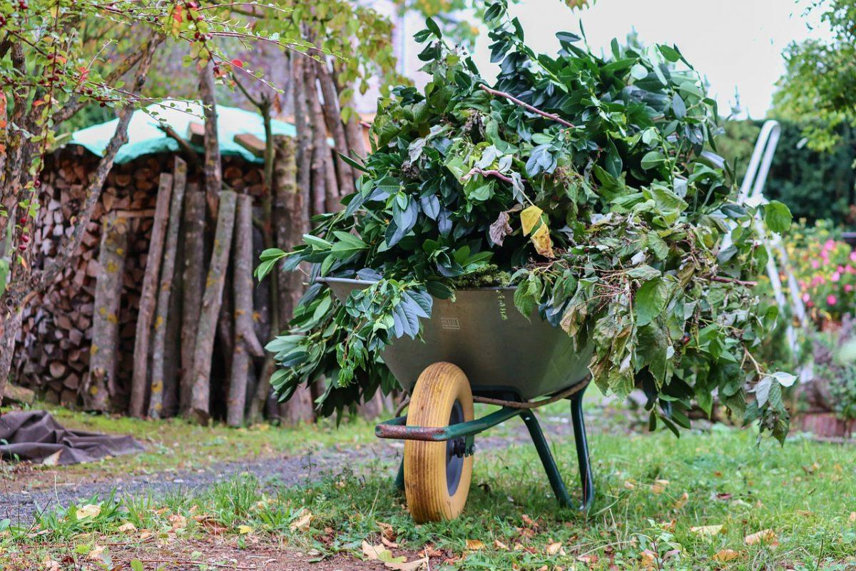 Winterfest machen: Grünschnitt häckseln und als Mulch verwenden